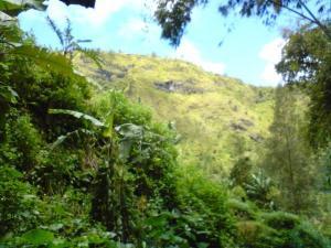 pemandangan-pohon1