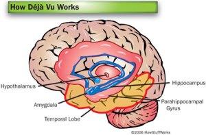 deja-vu-brain