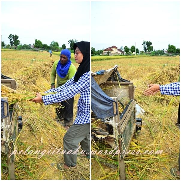 essay jika aku menjadi petani